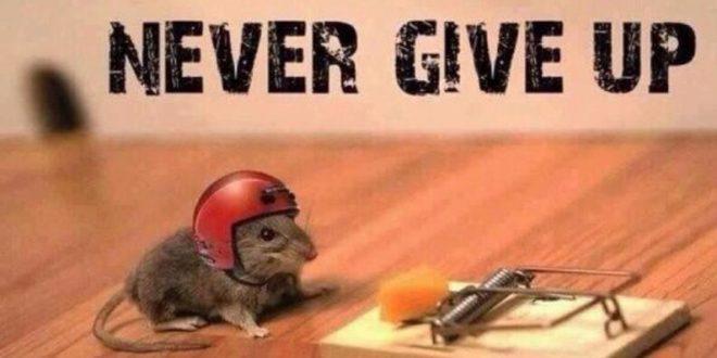 Bez odustajanja